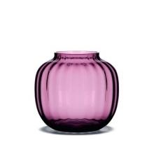 primula-purple