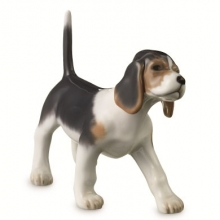 Beagle puppy also available many other Dogs & Cats